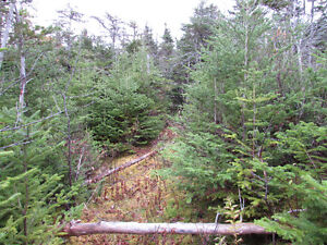 82-94 RIDGE ROAD, CHAPEL'S COVE..2 ACRES St. John's Newfoundland image 3