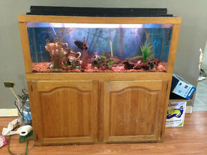 55 gallon tank $150 IF GONE BY WEEKEND