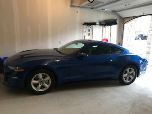 2018 Ford Mustang Coupe, Ecoboost 2.3T, 10 spd auto. 100 km