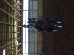 AMAZING QH MARE FOR PART BOARD!