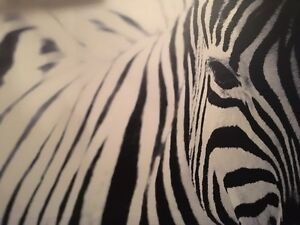 large zebra wall picture/portrait