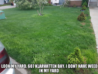 If you want to kill the weed from your yard .