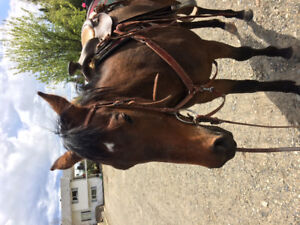 3 yr old  thoroughbred mare