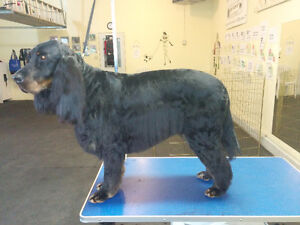 Exceptional Dog Grooming