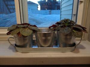 Trois petits pots de fleurs