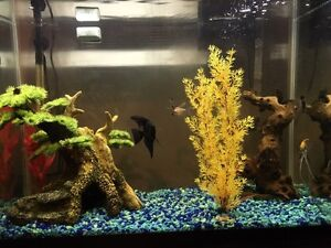 40 Gallon Fish Tank With Decorations