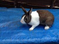 Male Rabbit £25