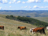 Prime Grazing Land in the Heart Of Ranchers Paradise