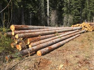 building logs for sale