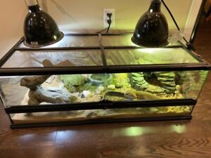 1 Old Bearded Dragon with Home and accessories