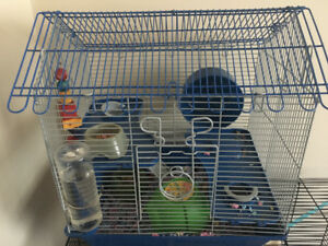 Long haired Syrian hamster and cage