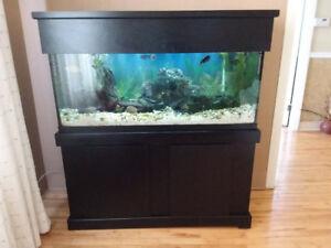 Aquarium 75 gall avec meuble tout équipé