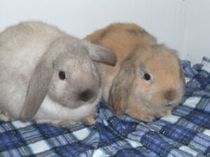 CUTE BABY RABBITS FOR SALE !!