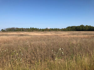 Looking for Land For Sale?