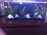 Trio fish tank aqua one