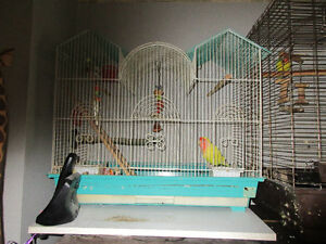 Two love birds looking for new forever home