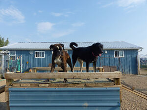 Pet Boarding and Daycare: Paws Claws N' Tails Moose Jaw Regina Area image 5