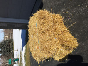 Clean & Dry Straw Bales