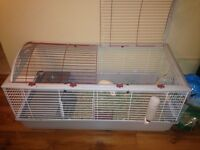 Guinea Pigs Flash (brown) and Princess (white)