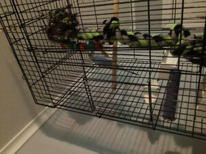 Limited time offer selling budgee with cage and food 20.00