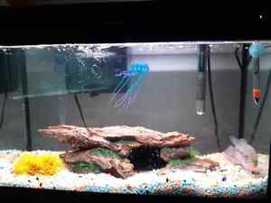 30 gallon fish tank kijiji free classifieds in toronto for Used fish tanks for sale many sizes