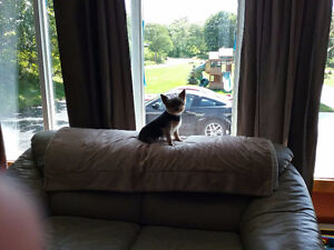 EXPERIENCED  IN-YOUR HOME/PET SITTER-24/7 St. John's Newfoundland image 10
