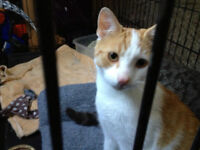 two male cats for adoption by Ca-r-ma Moncton