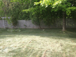 lawn damage London Ontario image 5