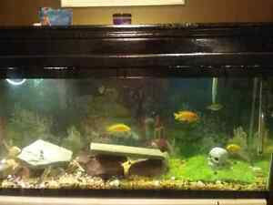 55 gal tank and fish for sale or trade for saltwater fish