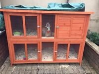 2x 4month Old Rabbits. And Brand new cage worth £90