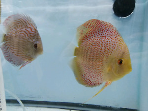 The D Friend's Farm.   Quality, healthy discus.