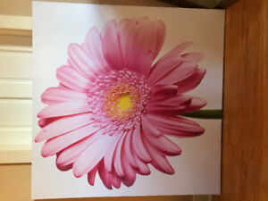 Large stretched canvas Gerber Daisy photo