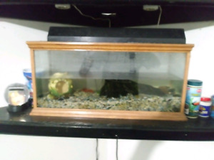 SALT OR FRESH ready to goCustom oak fishtank 25 gallon