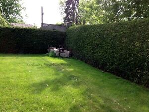 Cedar Hedge Trees For Privacy - Farm Fresh Oakville / Halton Region Toronto (GTA) image 3