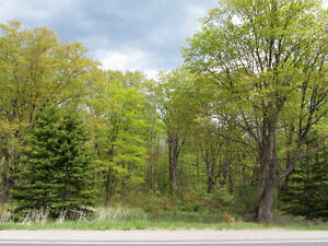 COUNTRY BUILDING LOT - HWY 35, Coboconk. $54,900. Kawartha Lakes Peterborough Area image 2
