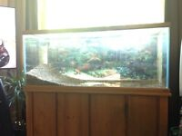 75 gallon aquarium plus more
