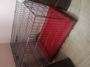 X-large Kennel with Kong Bed