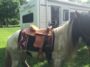 Gypsy Vanner Mare for sale