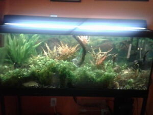 Aquarium and Metal Stand/ fish and plants 75 gal all included
