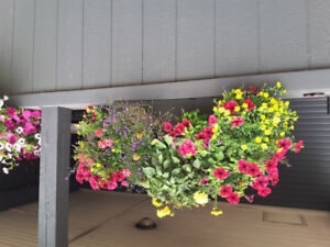 Large SUPER PETUNIA and SUNFLOWER Baskets