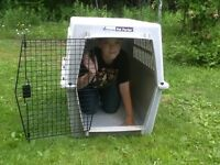 Extra Large Petmate Pet Porter Kennel For Large Dog