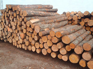 Spruce logs and lumber/boards/timber for sale