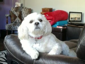 Caring Individual Needed for Very Occasional Dog Sitting