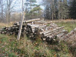 350 cedar posts- bulk sale