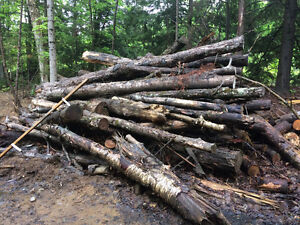Hardwood Logs - lot clearing