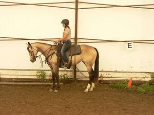 Pretty 3 year old reg. appendix quarter horse buckskin mare Strathcona County Edmonton Area image 2