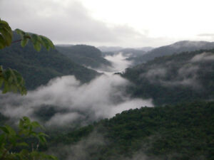Buy an Affordable Belize Lot in a Tropical Rainforest!
