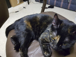 Black and Orange cat found in Millwoods/Lakewood area