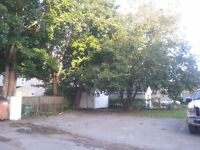 Safe Tree Removal - Pruning - Lot Clearing - Thinning