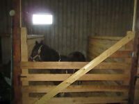 INDOOR HORSE BOARDING AVAILABLE